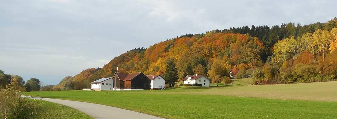 Herbstliche Blätter am Donauplanetenweg